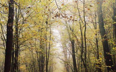3 Rituels simples pour gens pressés – en forêt